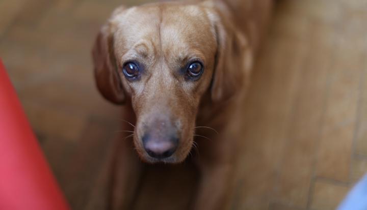 dog-looks-at-camera