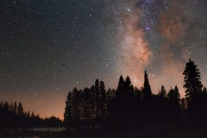 silhouettes of trees beneath a starry sky