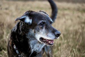 dogs GYA_Flickr