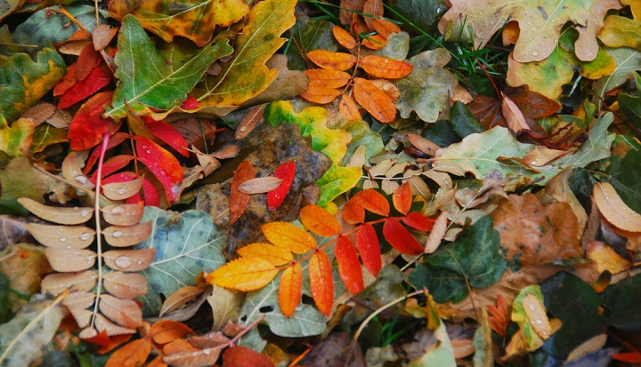 fall leaves_flickr