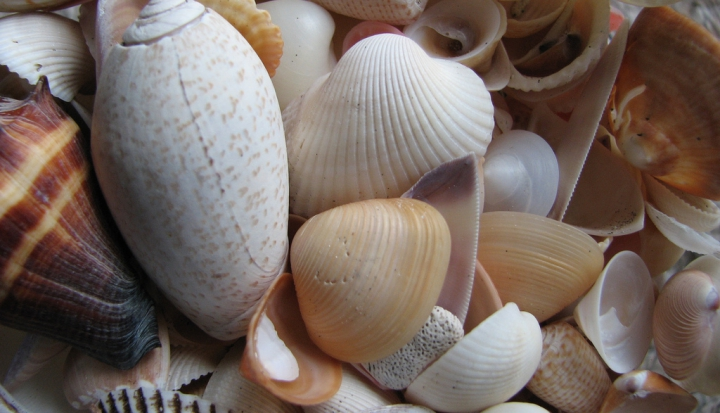shells_flickr