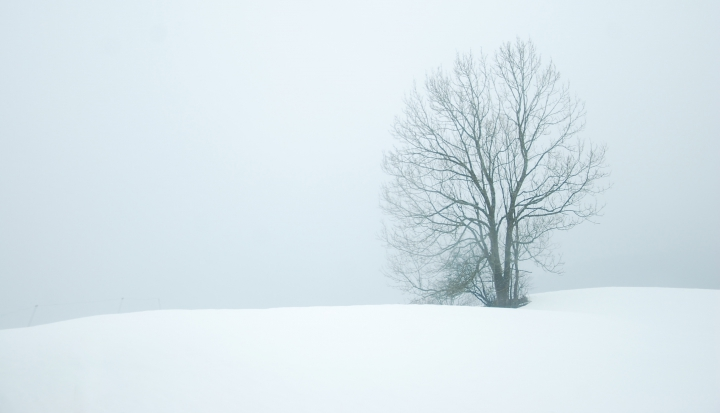 a-tree-stands-alone-covered-with-snow