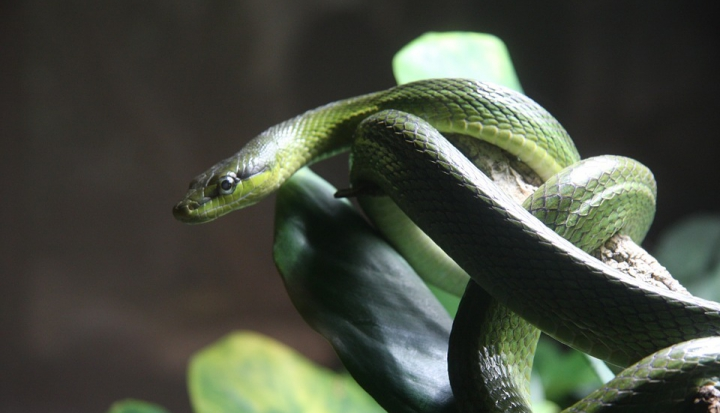 snake-coiled-around-branch