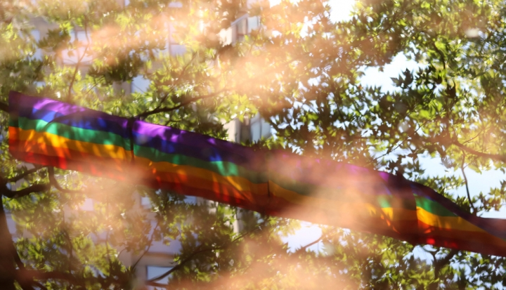 rainbow-through-trees