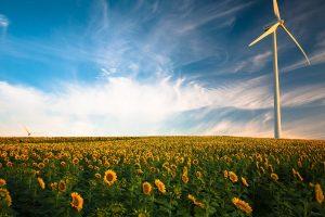 sunflower-field-wind-turbine