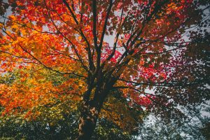 tree-with-leaves-changing-colors