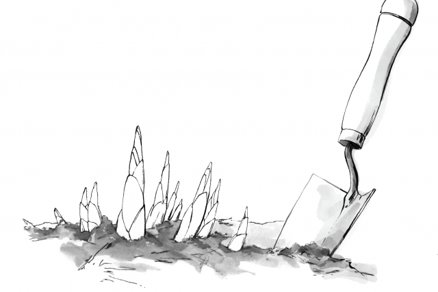 trowel-in-the-ground-beside-sprouting-plants