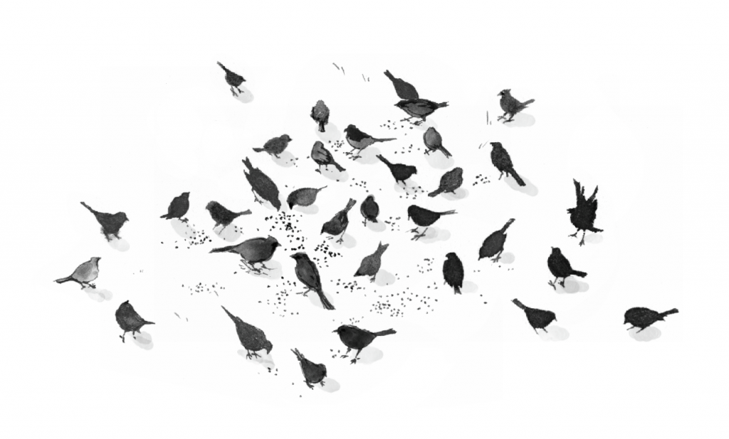 flock-of-crows-in-snow