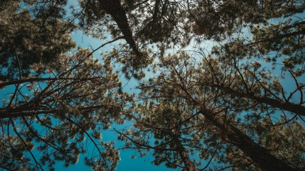 low-angle-photo-of-trees