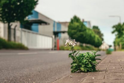 smlall-plant-growing-from-concrete-road