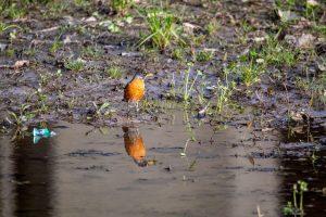 small-bird-standing-by-fresh-water
